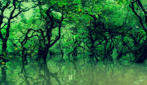 forest canon swamp sylhet bangladesh ratargul adiyatanan