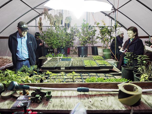Greenhouse Starts