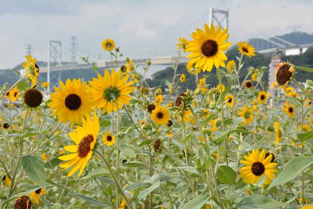 咲いた花に飾れた関門橋