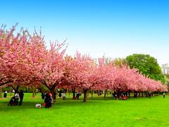Brooklyn Botanic Garden  2016