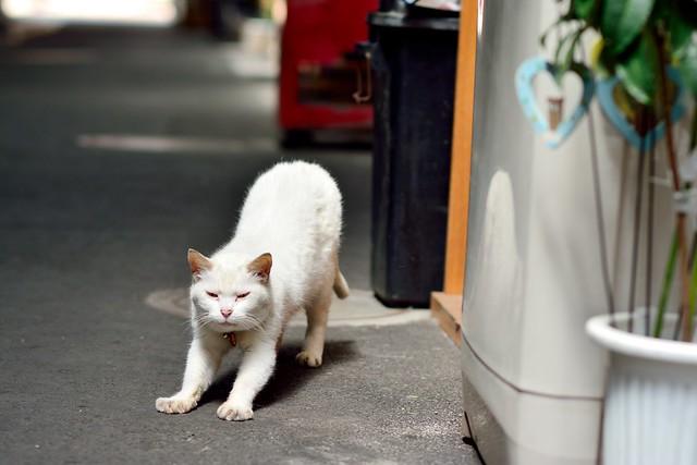 気持ちよさそうにストレッチするネコの写真