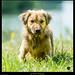 Dog (1 von 1).jpg