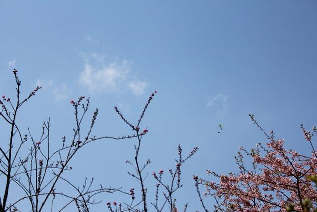 2014-03-16_00108_高松山