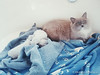 Pepsi and her kittens