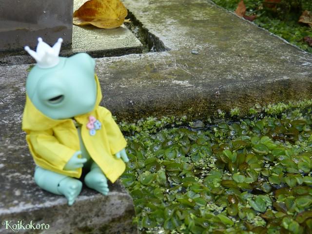 Les tinies de Koikokoro~photos en vrac - Page 6 15471391598_0cac7e5fe2_z