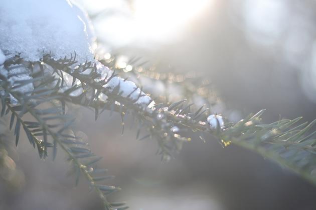 Momente im Dezember Eugli (6)