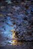 Scott Kelby Worldwide Photowalk_4692 LR