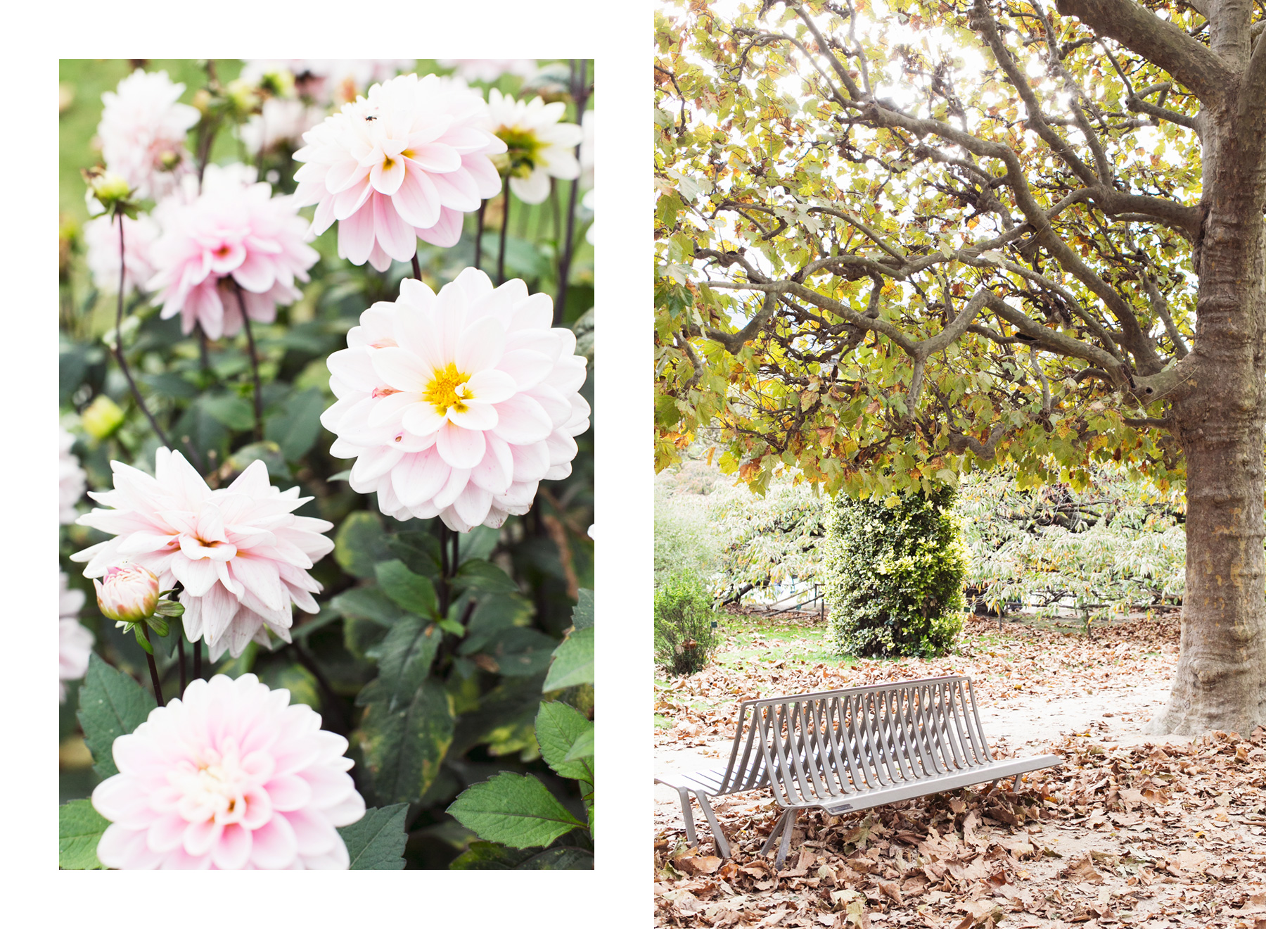 Jardin des Plantes by Carin Olsson (Paris in Four Months)