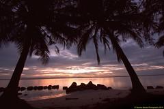 Palmtrees watching sunset
