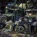 Oldtimer Car Graveyard (08)