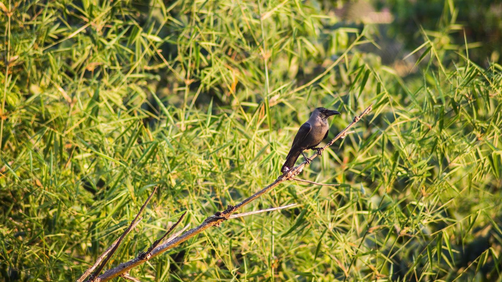 Bird-watching at Carambolim