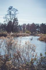 Swamp Marsh in Forest Park St. Louis