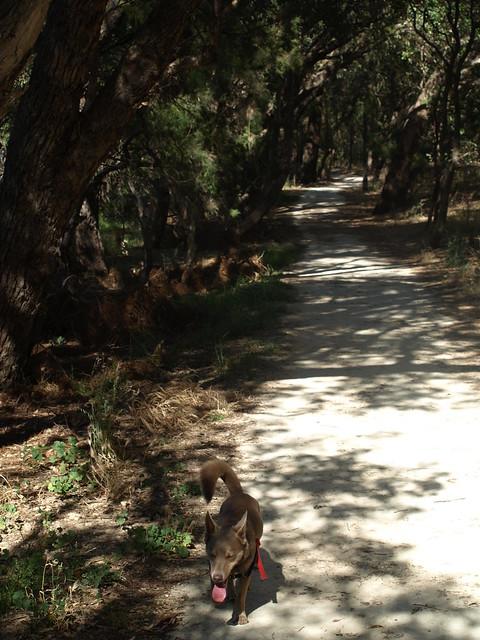 Clare Dog Walking Frimley