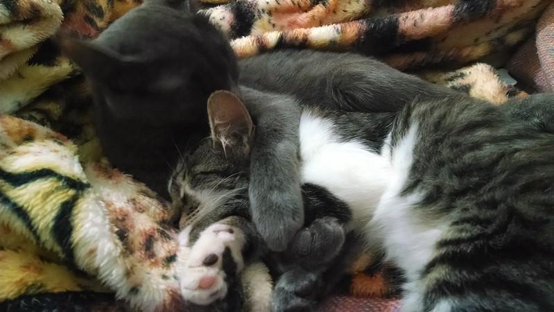 Nina's cats