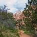 Trail - Zion National Park - Utah - 18 October 2014 by goatlockerguns