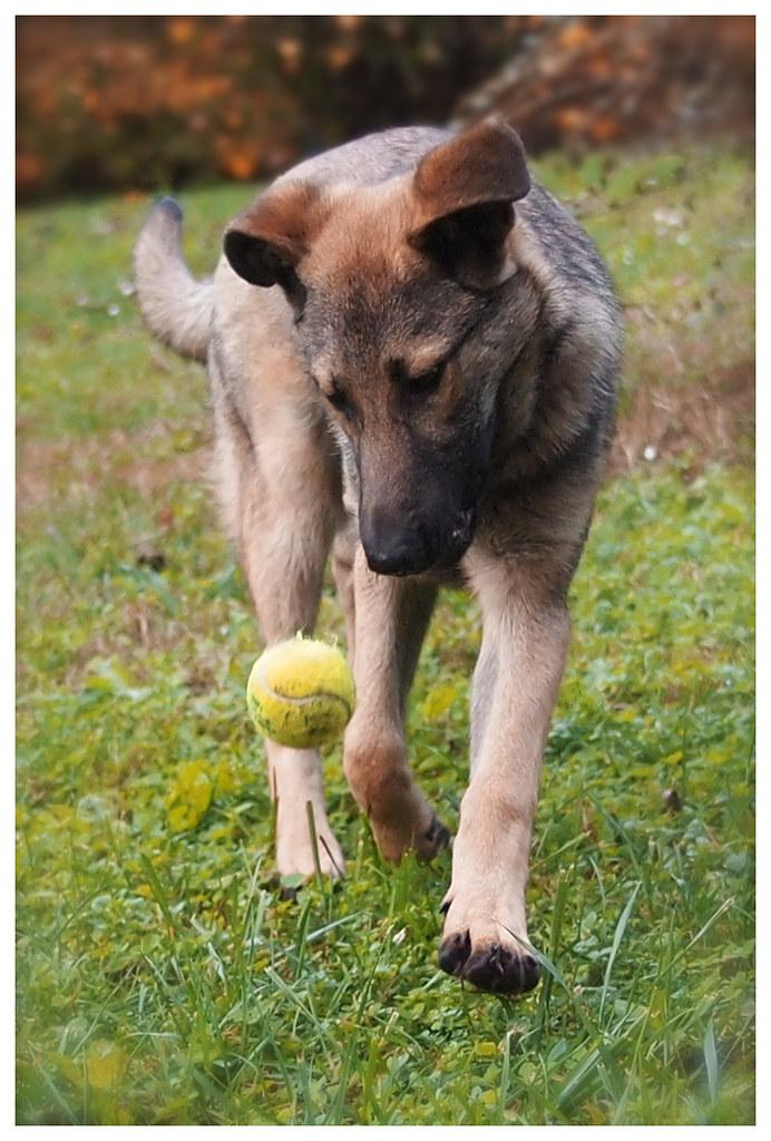 Photographie d'animaux - conseils pour devenir un pro ! - Page 2 15868013302_70f2455fab_b