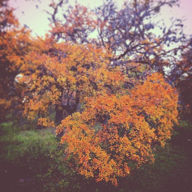 Cedar elm!