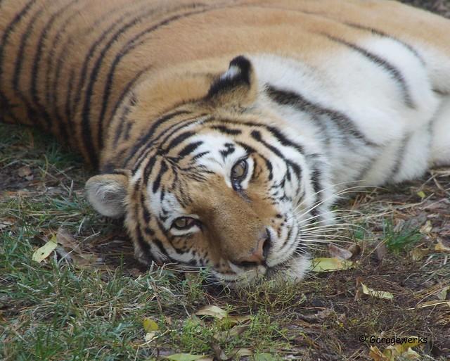 St Louis Zoo 2014