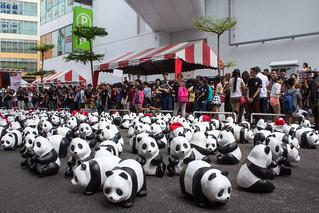 1600_Panda_Jalan_Lintang_Penang_01