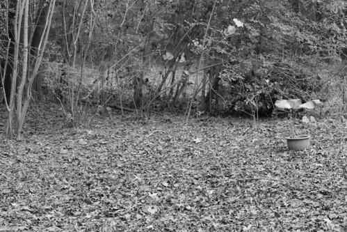 CrabAppleLane Backyard - December 7, 2014