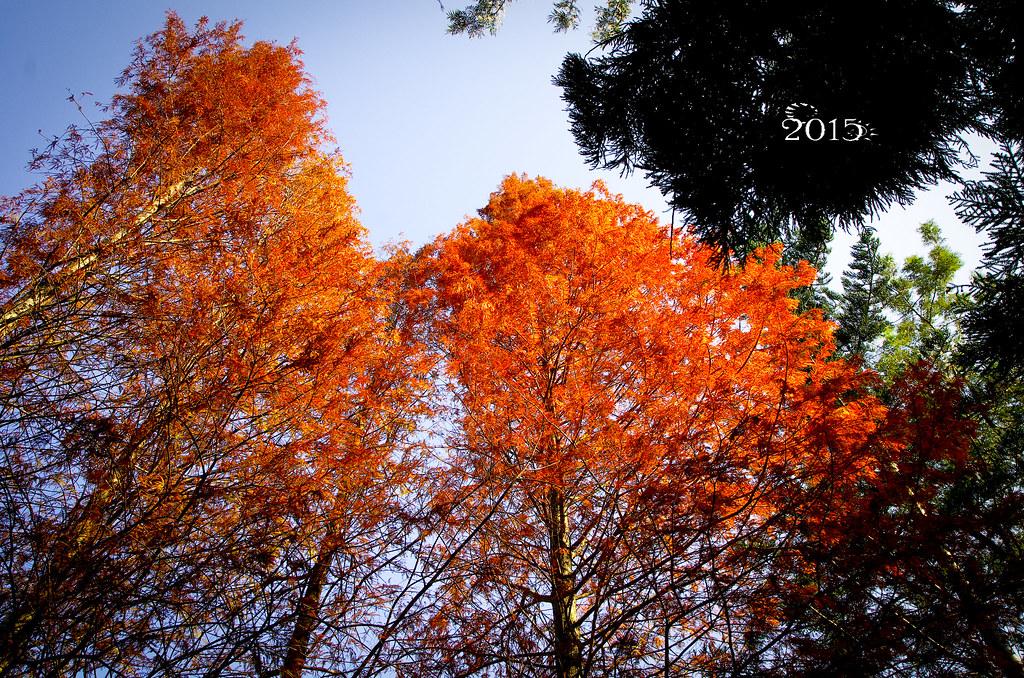 20150101桃源仙谷+復興鄉