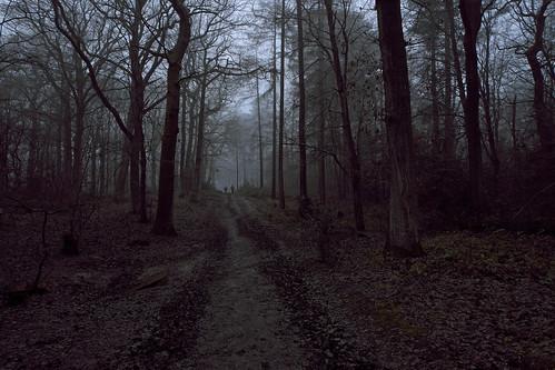 wood trees winter people woods fujifilm wgc xpro1 sherrards 18mmf2 gor44