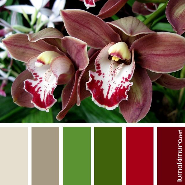 Orquídeas #1