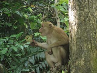 Mono dispuesto a comerse tu comida