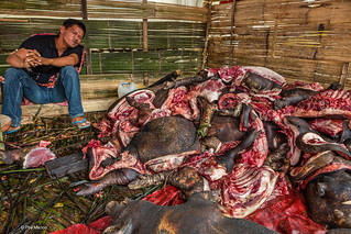 Hamming it up next to carcasses of sacrificed pigs - Tana Toraja, Sulawesi Indonesia