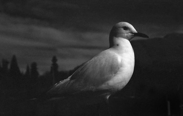 光景.海鳥