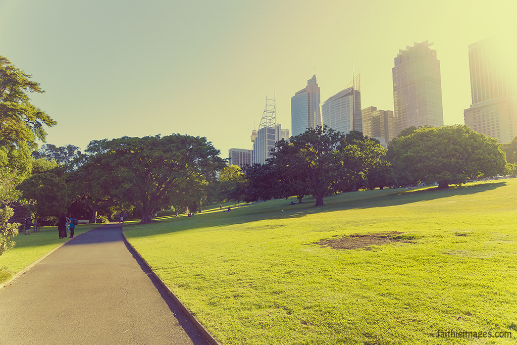 Golden hour in Sydney Royal Botanic Gardens