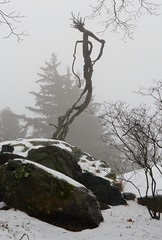 Venusvine with stones, snow, and fog