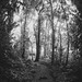Mysterious forest by Lissa**