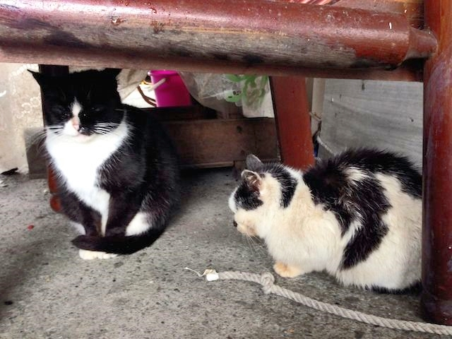 2cats.min_