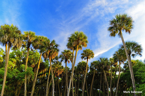 park trees sky lake nature sunrise orlando nikon florida scenic palm 1855mm polarizer jesup d5100