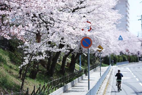 Go! Bicycle Go! (Spring ver.)