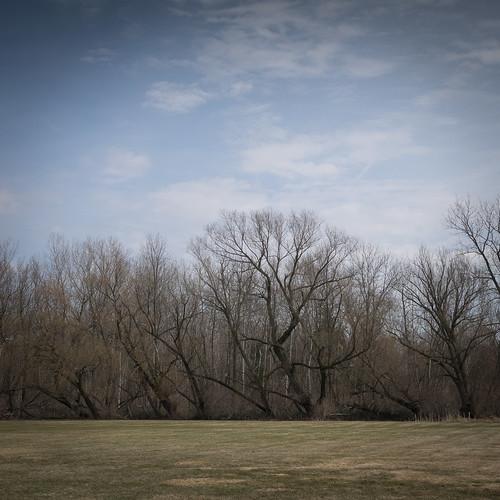 trees newyork unitedstates pittsford monroeave secondlook