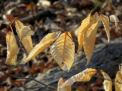 autumn's stragglers