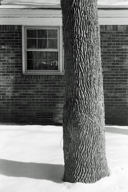 Tree and window