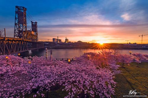 oregon sunrise portland spring bridges cherryblossom steelbridge sunstar