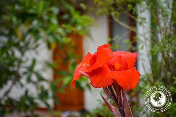 Hotel Rosa de America Garden