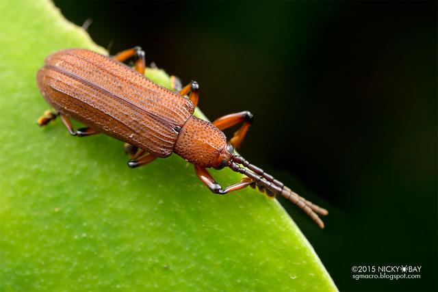 Beetle - DSC_3753