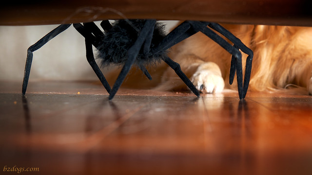The Thing Under The Sofa