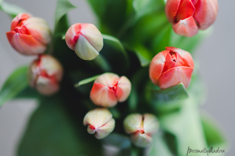 5 Ways to Photograph Flowers // Top Down // Ombre Tulips
