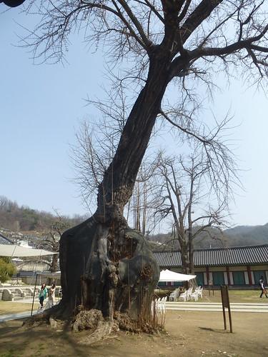 Co-Jeonju-Hanok-Hyanggyo-Confucius (4)