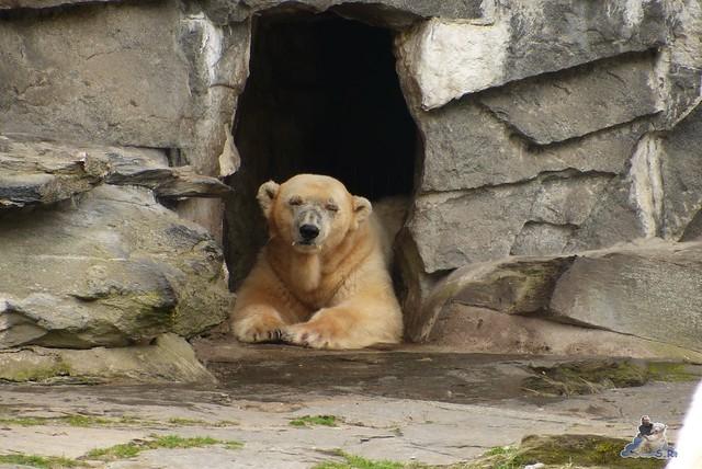 Tierpark Berlin 12.04.2015 22
