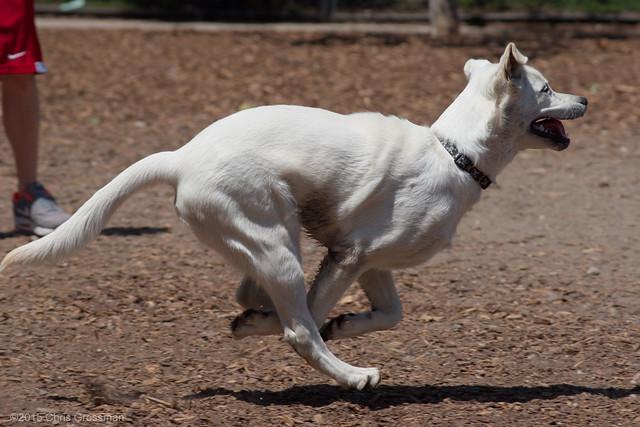 Running Dog - Nikon D750 - 75-300mm f/4.5-5.6 AF Nikkor