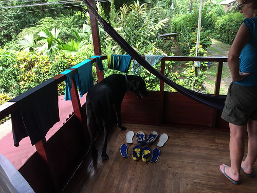 Cahuita: le chien immense de l'hôtel qui vient nous rendre visite sur notre balcon...