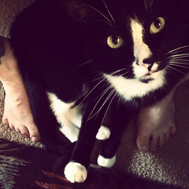 Piggy on My Feet #cats #tuxedocat #helpingwithlaundry