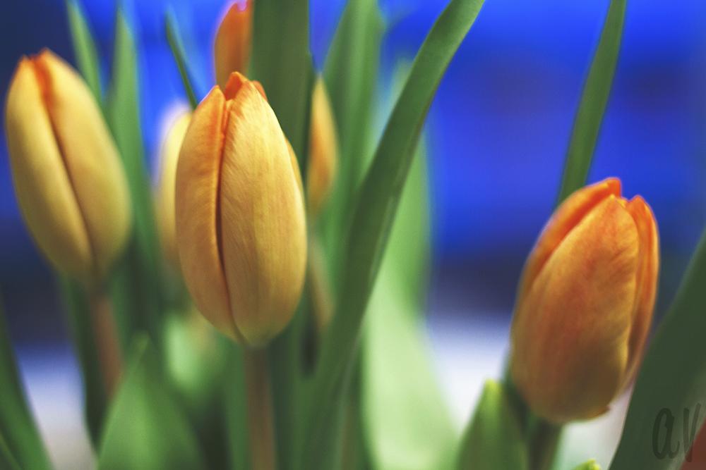 kukkiakukkia